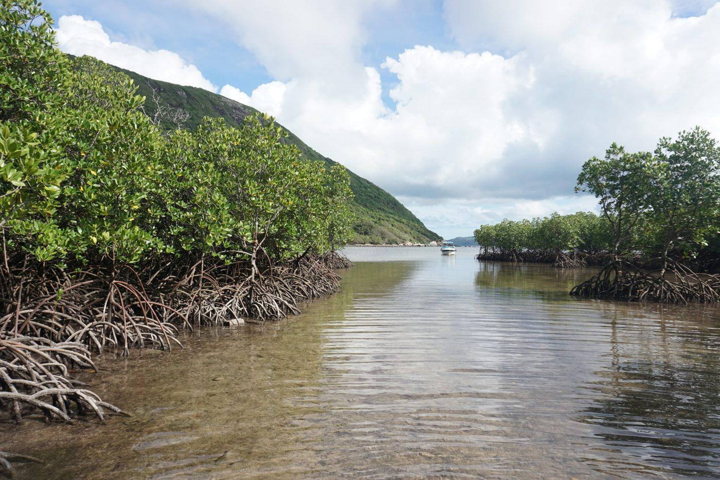 Rừng ngập mặn Vườn Quốc gia Côn Đảo